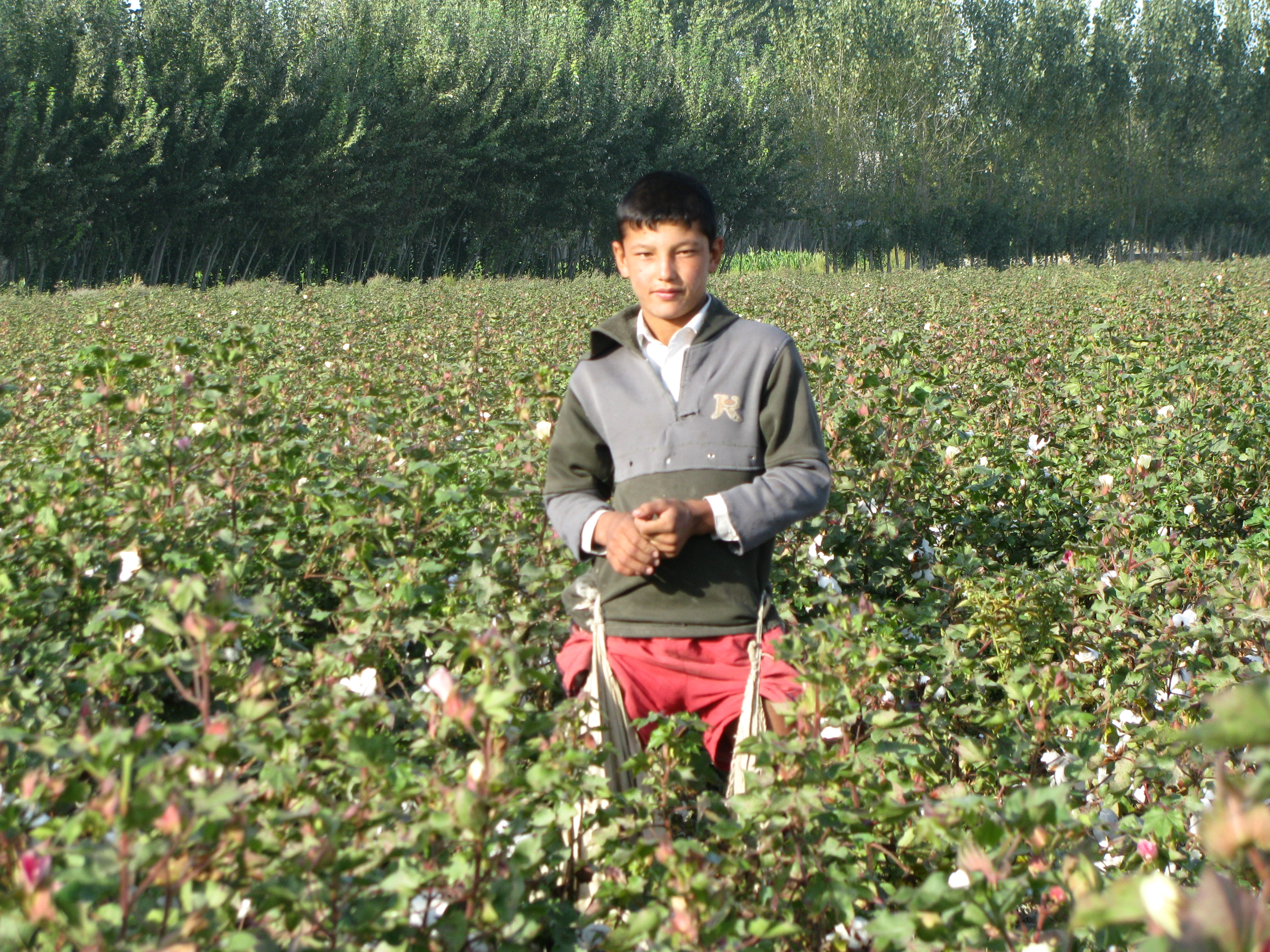 NGO accuses cotton dealer of profiting from forced child labor