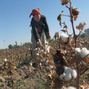 Cotton 2010 – 19