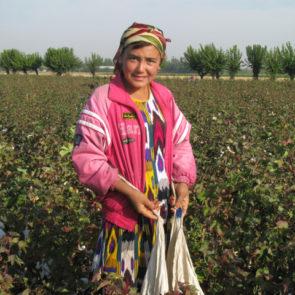 Cotton 2010 – 20