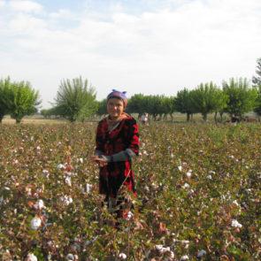 Cotton 2010 – 18