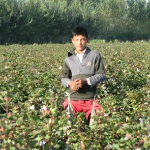 Cotton 2010 – 15