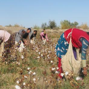 Cotton 2010 – 28