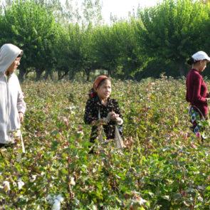 Cotton 2010 – 27