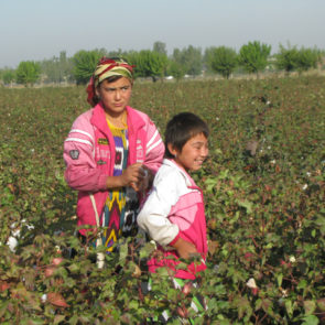 Cotton 2010 – 24