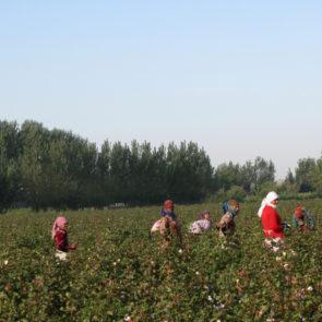 Cotton 2010 – 22