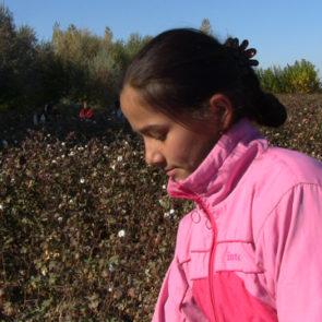 Cotton 2009 – 10