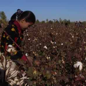 Cotton 2009 – 11