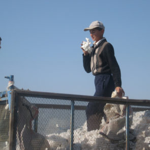 Cotton 2009 – 16
