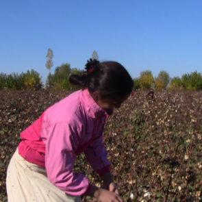 Cotton 2009 – 7