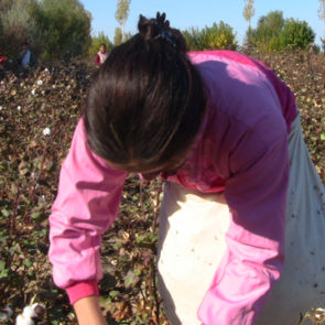 Cotton 2009 – 9