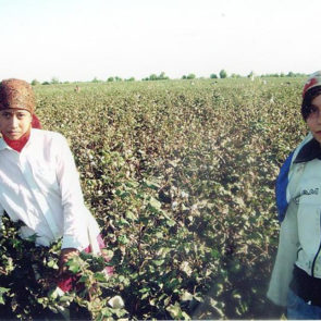 Cotton 2010 – 13