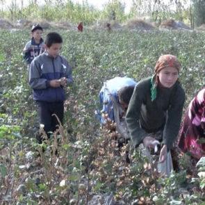 Cotton 2010 – 16