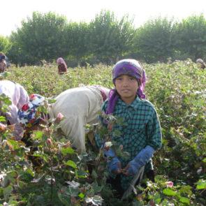Cotton 2010 – 17