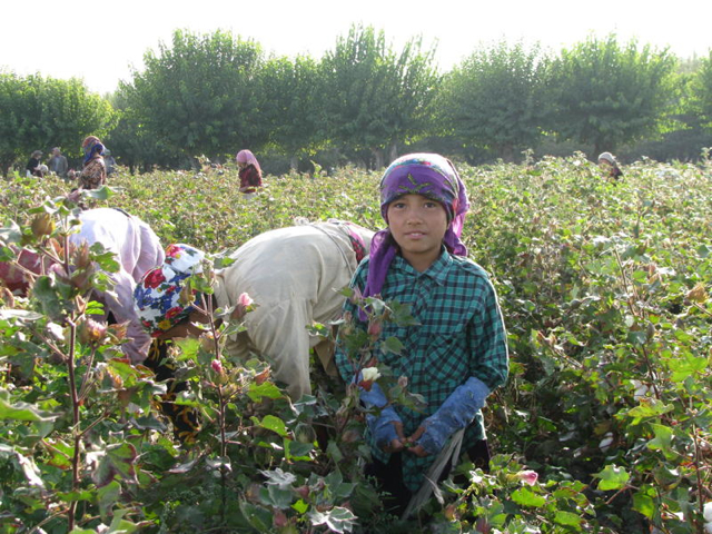 Comment: Umida Niyazova on the Uzbek cotton campaign