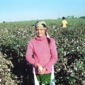 Cotton 2010 – 2