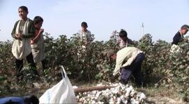 Cotton 2010 – 30