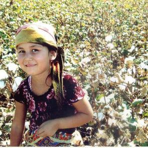 Cotton 2010 – 32