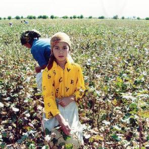 Cotton 2010 – 33