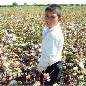 Cotton 2010 – 35