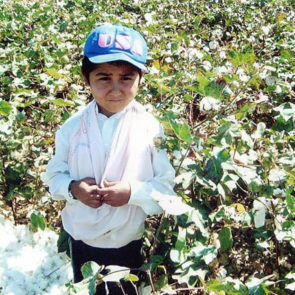 Cotton 2010 – 40