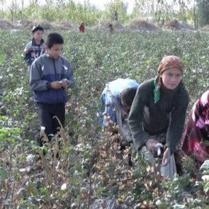 Cotton 2010 – 9