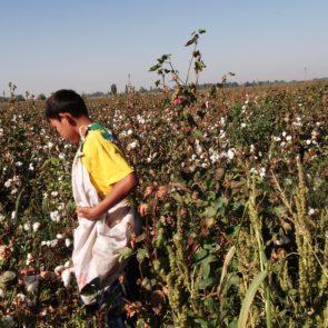 Cotton 2011 – 1