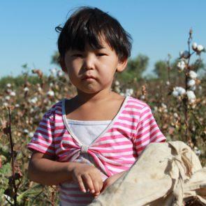 Cotton 2011 – 10