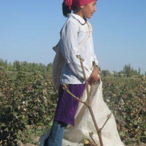 Cotton 2011 – 14