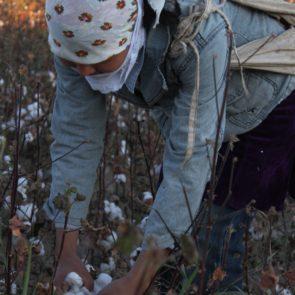 Cotton 2011 – 9