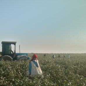 Girl picking cotton next to defollation tracktor