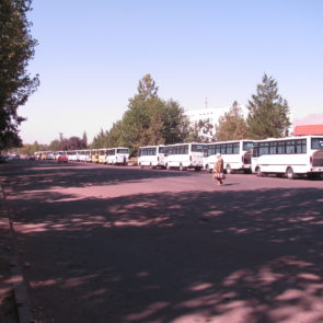 Organizing buses taking harvesters to the fields.