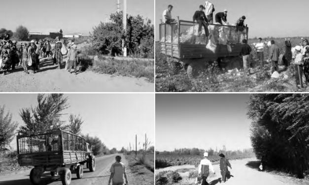 """Cotton – it's not a plant, it's politics"". The system of forced labour in Uzbekistan's cotton sector"