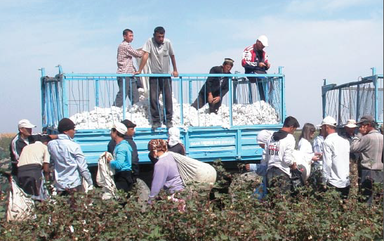 UGF Report: A Systemic Problem: State-Sponsored Forced Labour in Uzbekistan's Cotton Sector Continues in 2012
