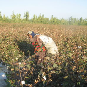 Woman carrying cotton harvest