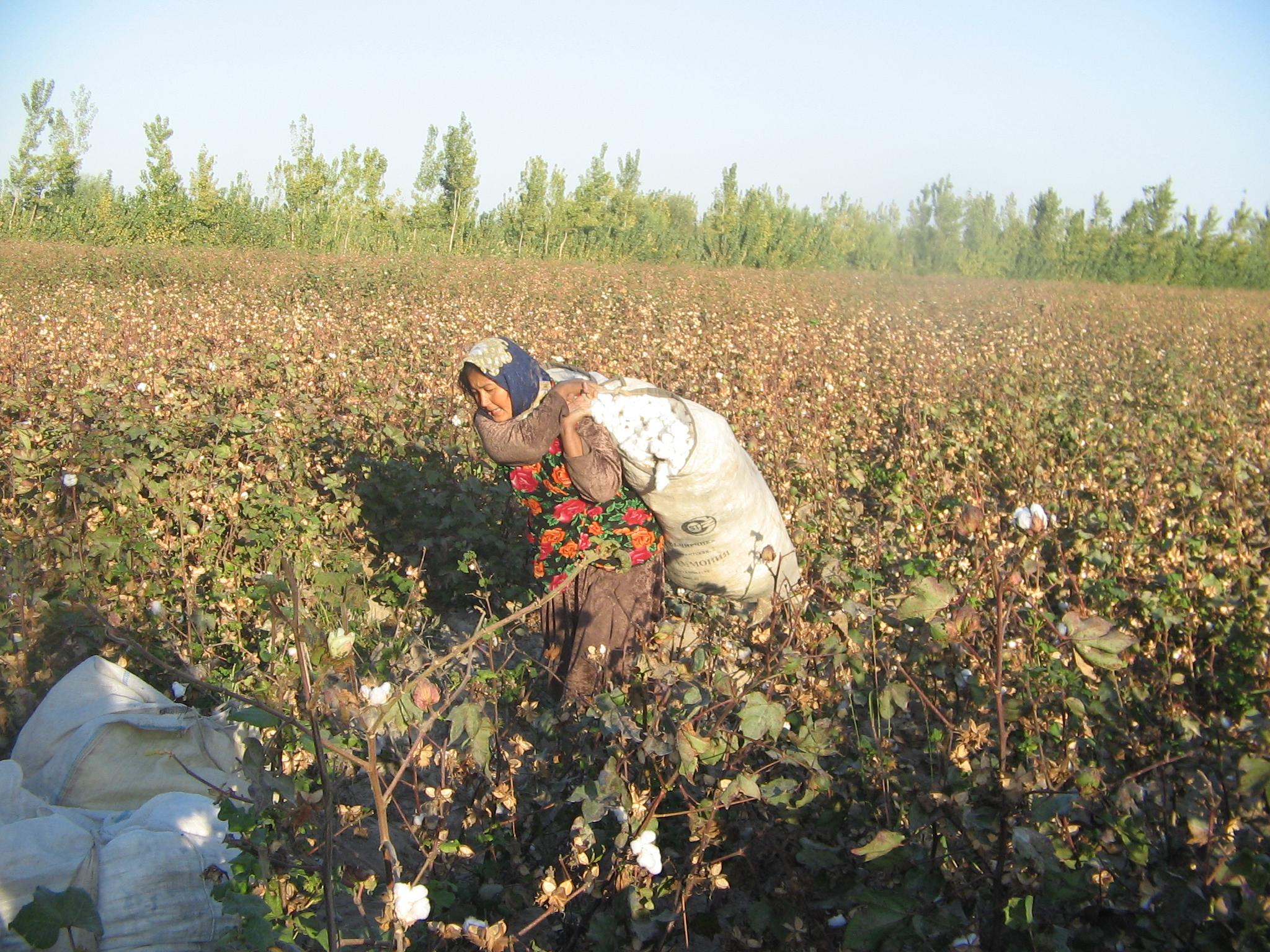 Бренды хотят получить гарантии борьбы с принудительным трудом и поддержки гражданского общества в Узбекистане