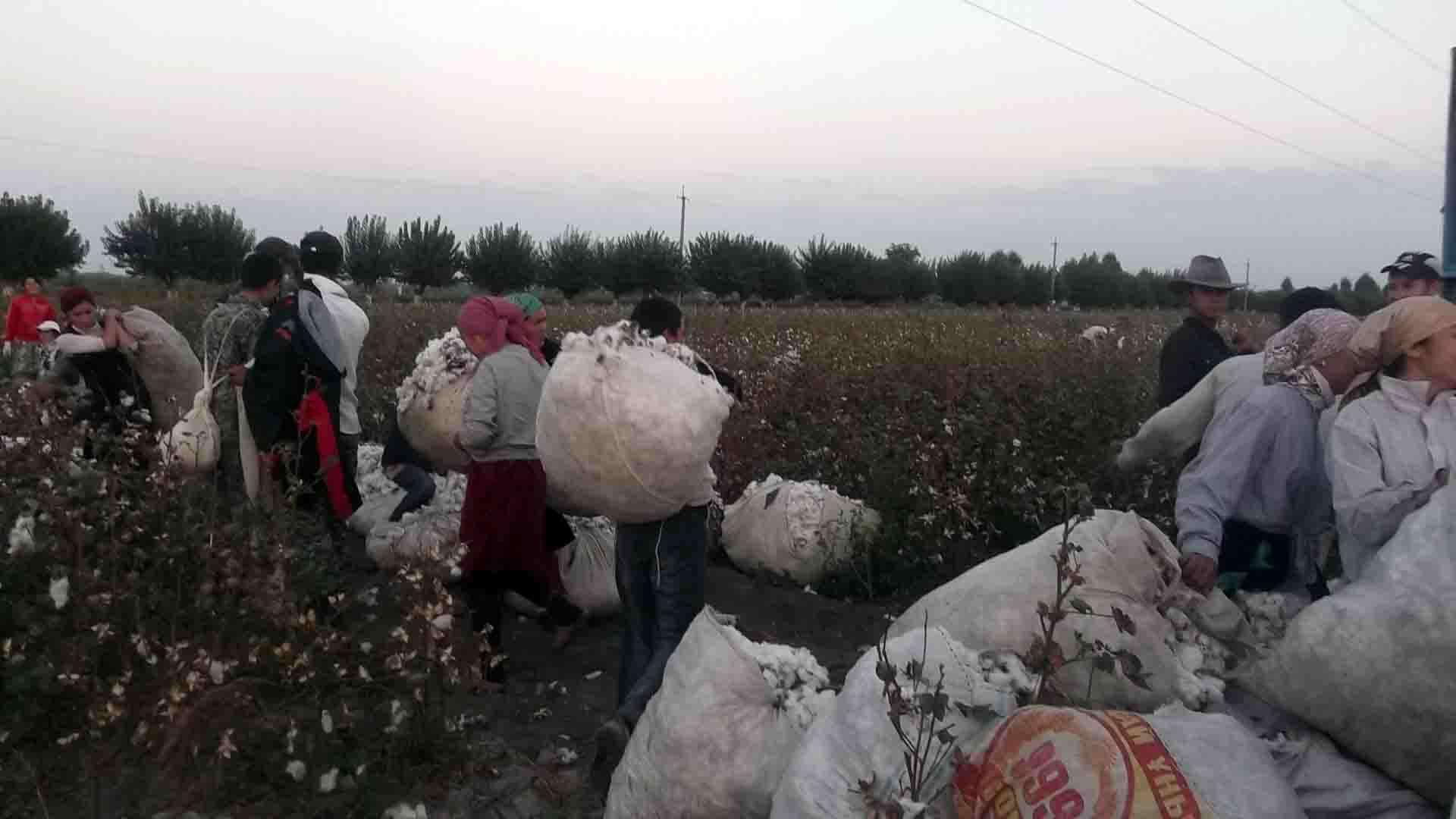 The Uzbek-German Forum for Human Rights Preliminary Report on Forced Labor During Uzbekistan's 2014 Cotton Harvest