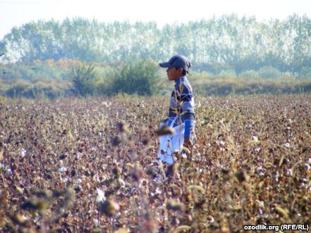 Statement from the Cotton Campaign on the Start of the Cotton Harvest in Uzbekistan