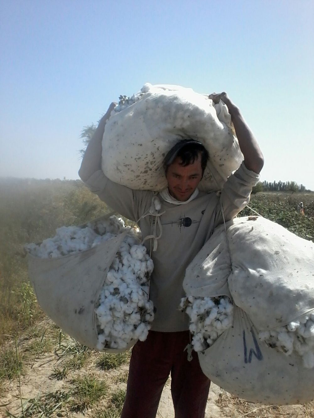 Cotton Harvest in Uzbekistan – 2019