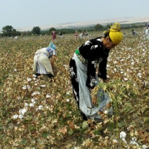 Workers picking cotton © UGF 2016