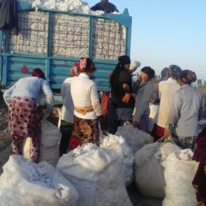 Delivery of harvested in cotton in Karakalpakstan © UGF 2016