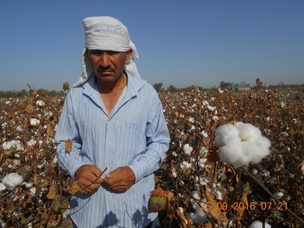 Review of the 2012 Cotton Harvest in Uzbekistan