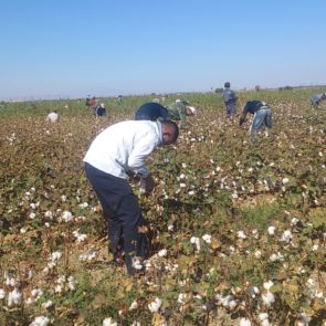 Worker picking cotton © UGF 2016