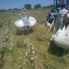 Workers collecting cotton © UGF 2016