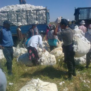 Workers loading the truck with cotton © UGF 2016