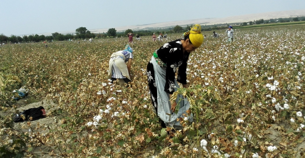Report on Cotton Production in Uzbekistan 2015