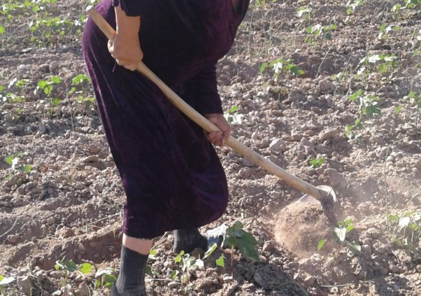 Uzbekistan: Forced and Child Labor in Spring Fieldwork Linked to World Bank Project