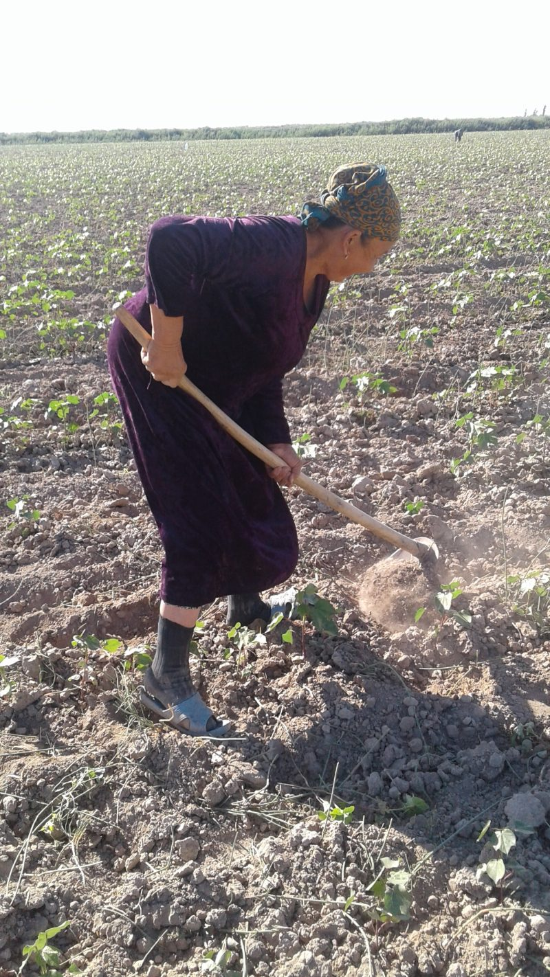 Forced and Child Labor in Spring Fieldwork Linked to World Bank Project