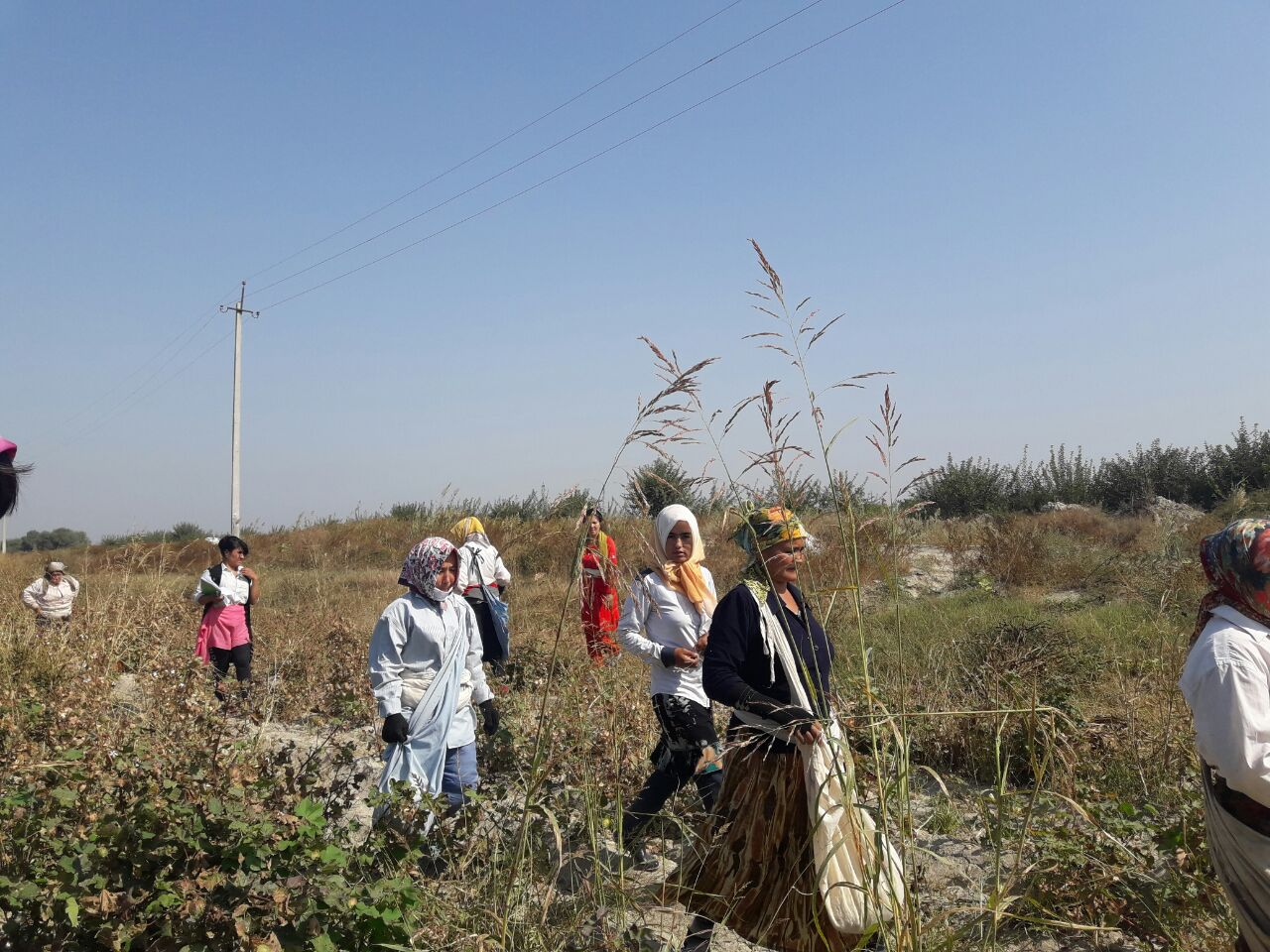 Some Workers Excused from Cotton Fields