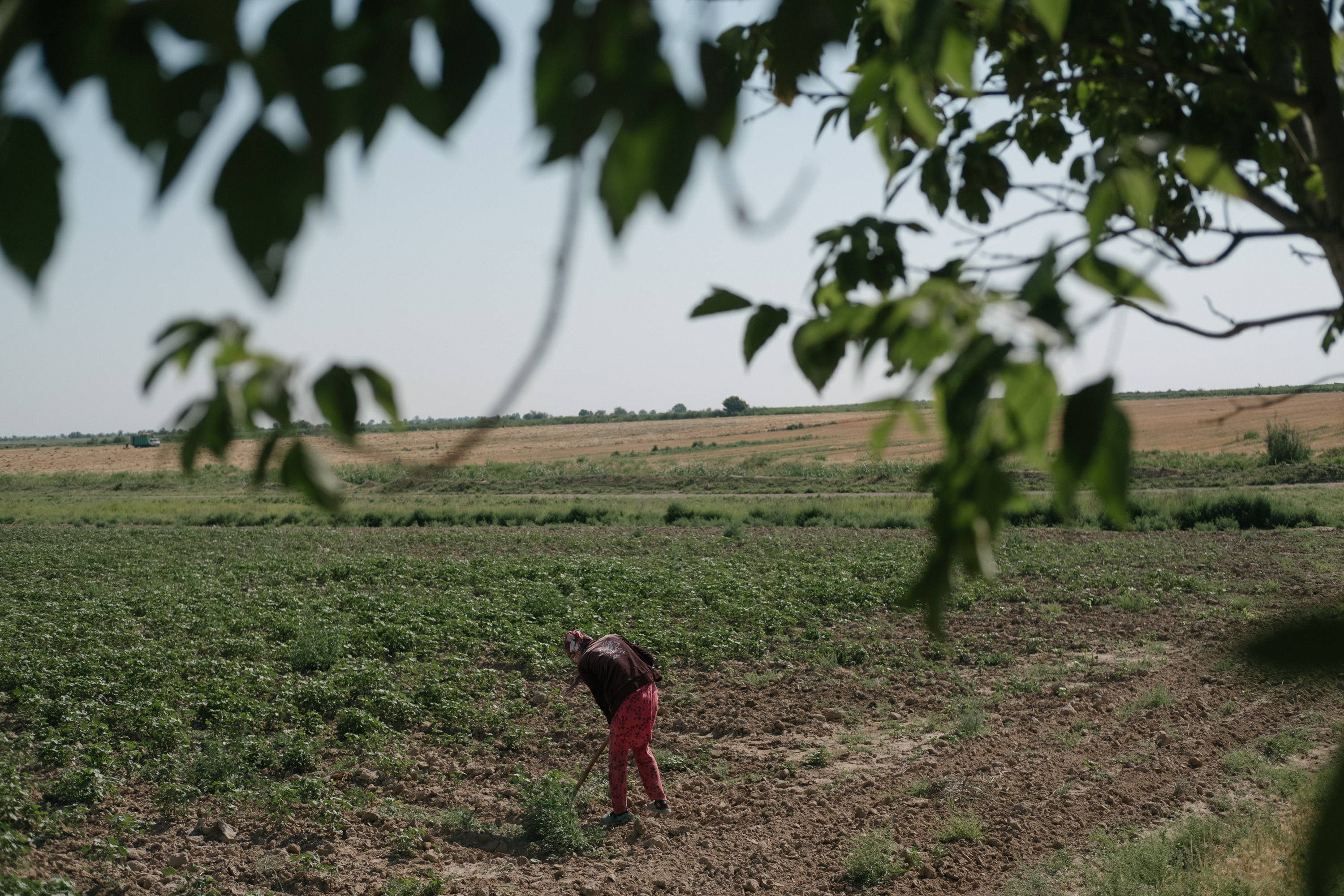 CHRONICLE OF FORCED LABOUR IN UZBEKISTAN