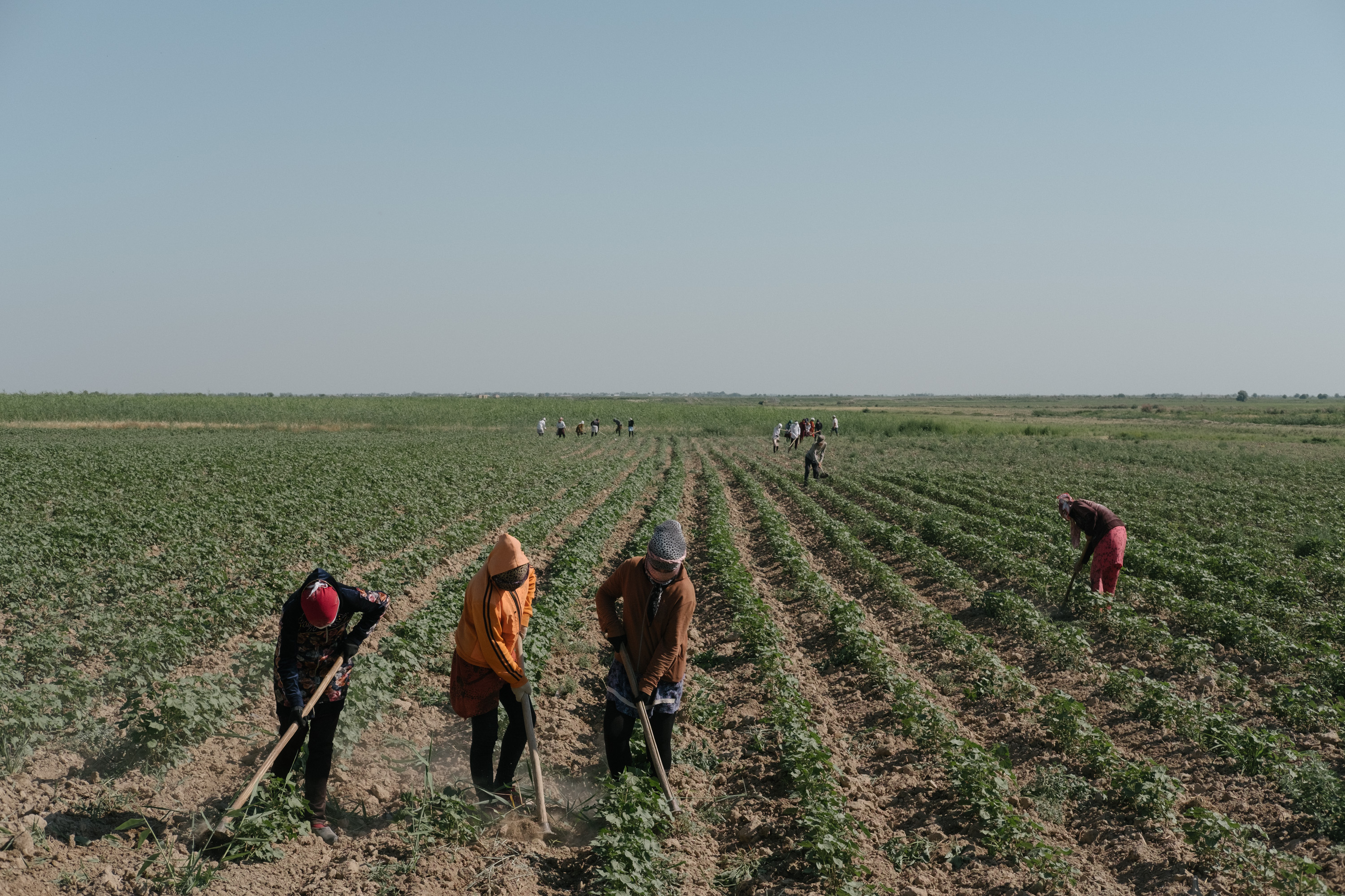 Forced Labor Persists in Uzbekistan's Cotton Fields